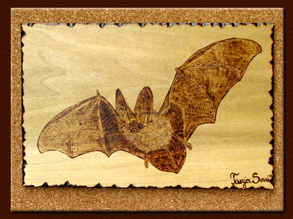 Townsend's Big-eared Bat tanja sova pyrography