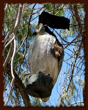 unusual nest owl tanja sova arizona